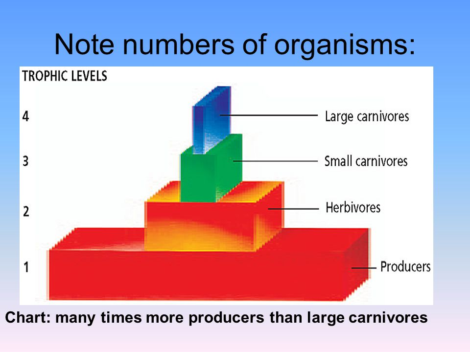 Note numbers of organisms: