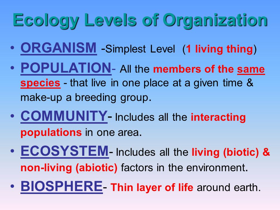 Ecology Levels of Organization