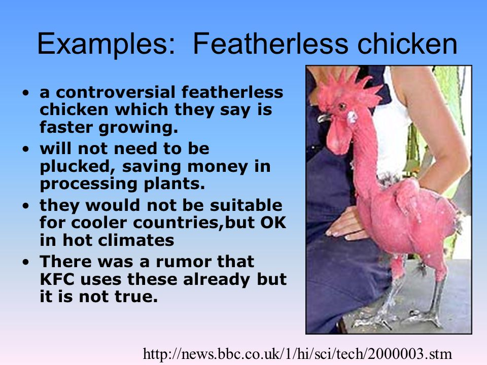 Examples: Featherless chicken