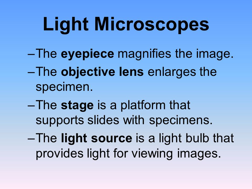 Light Microscopes The eyepiece magnifies the image.