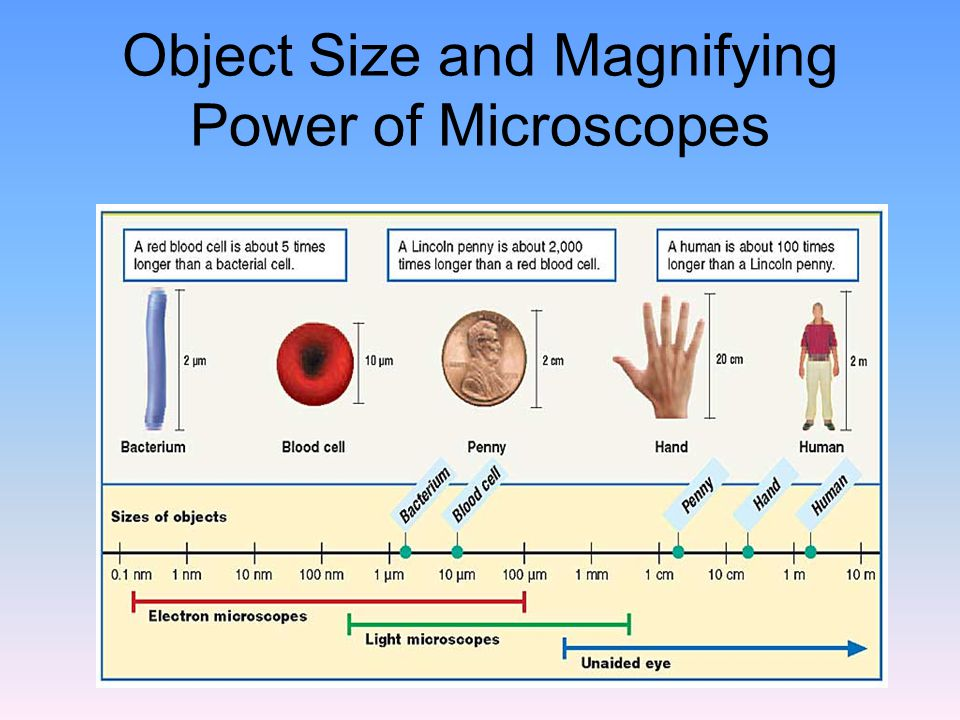 Object Size and Magnifying Power of Microscopes