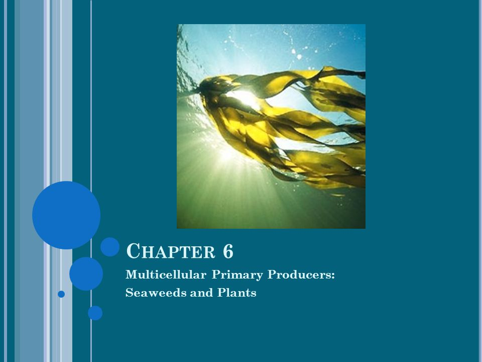 Multicellular Primary Producers: Seaweeds and Plants