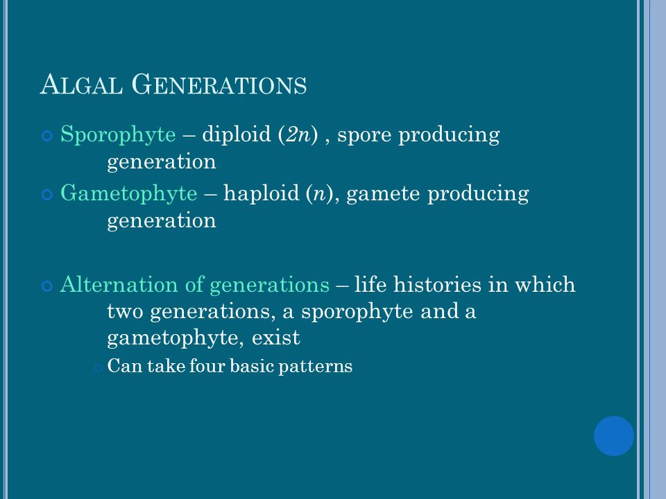 Algal Generations Sporophyte – diploid (2n) , spore producing generation. Gametophyte – haploid (n), gamete producing generation.