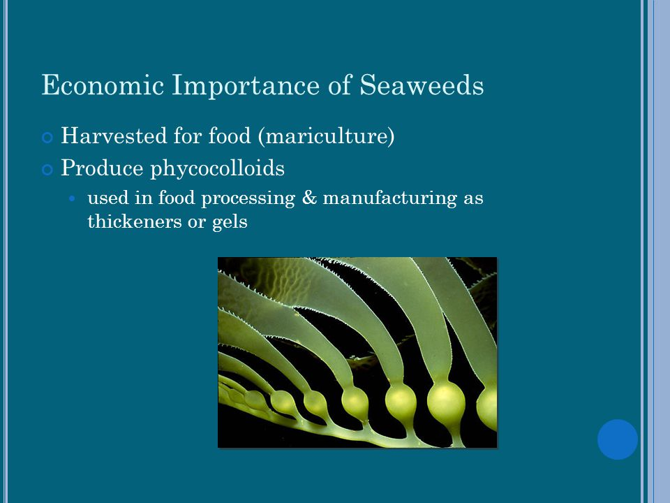 Economic Importance of Seaweeds
