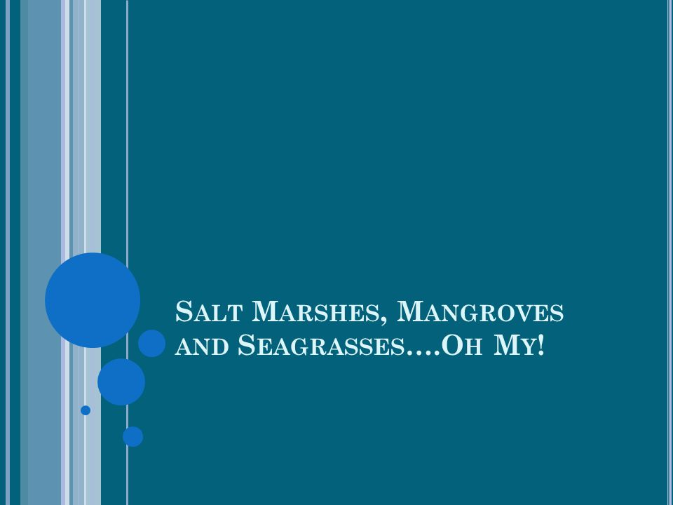 Salt Marshes, Mangroves and Seagrasses….Oh My!