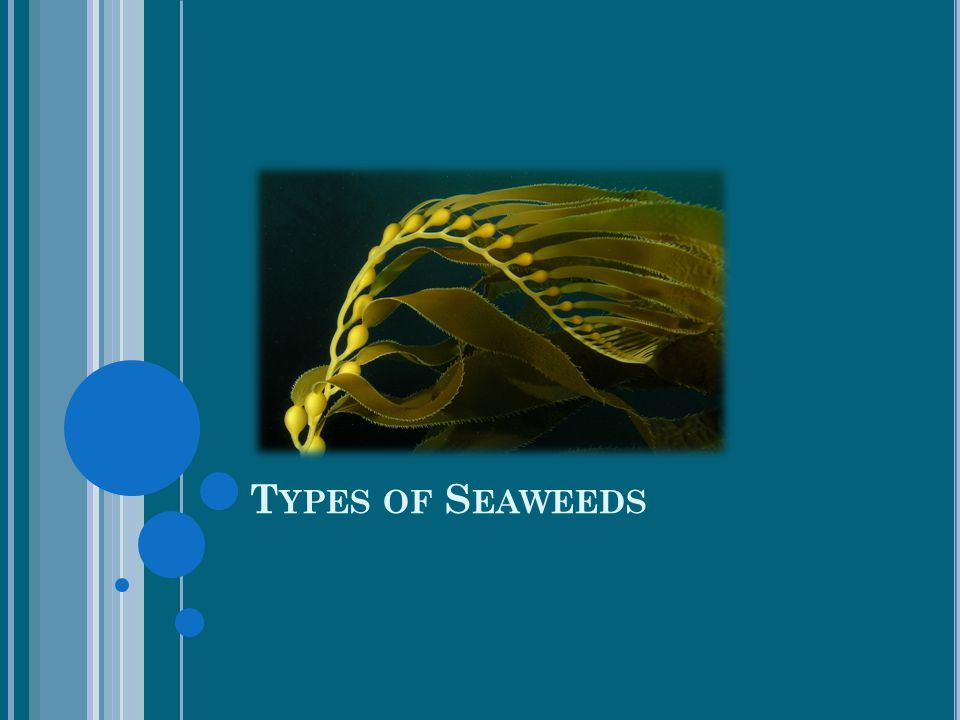 Types of Seaweeds