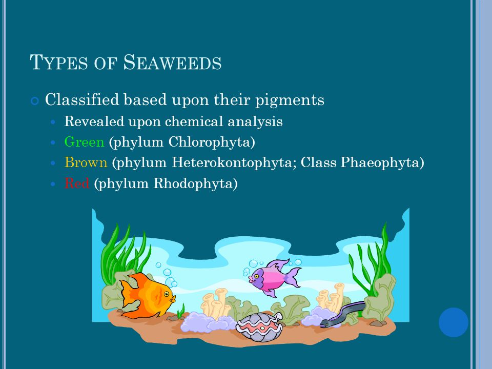 Types of Seaweeds Classified based upon their pigments