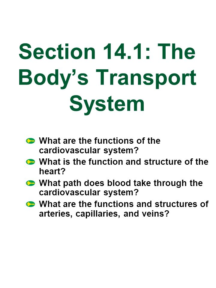 Section 14.1: The Body's Transport System