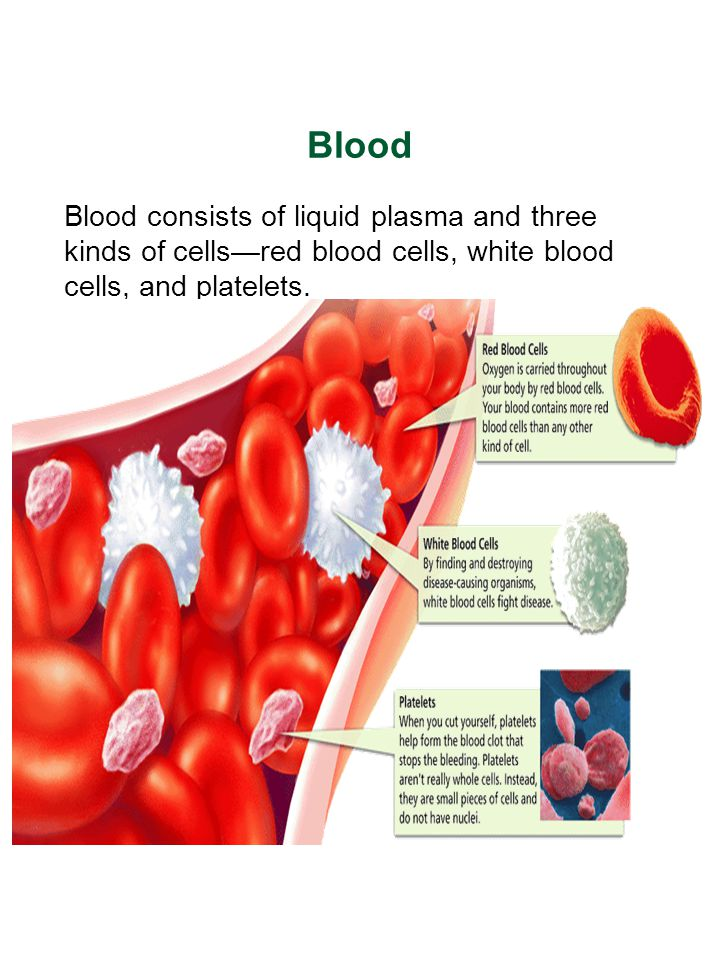 Blood Blood consists of liquid plasma and three kinds of cells—red blood cells, white blood cells, and platelets.