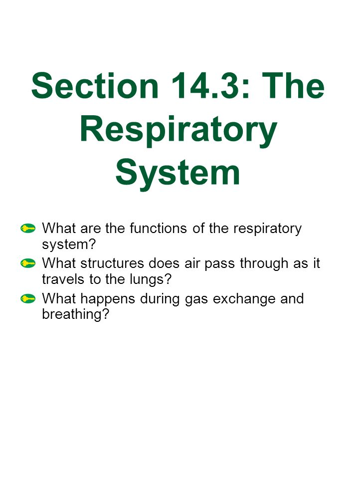 Section 14.3: The Respiratory System