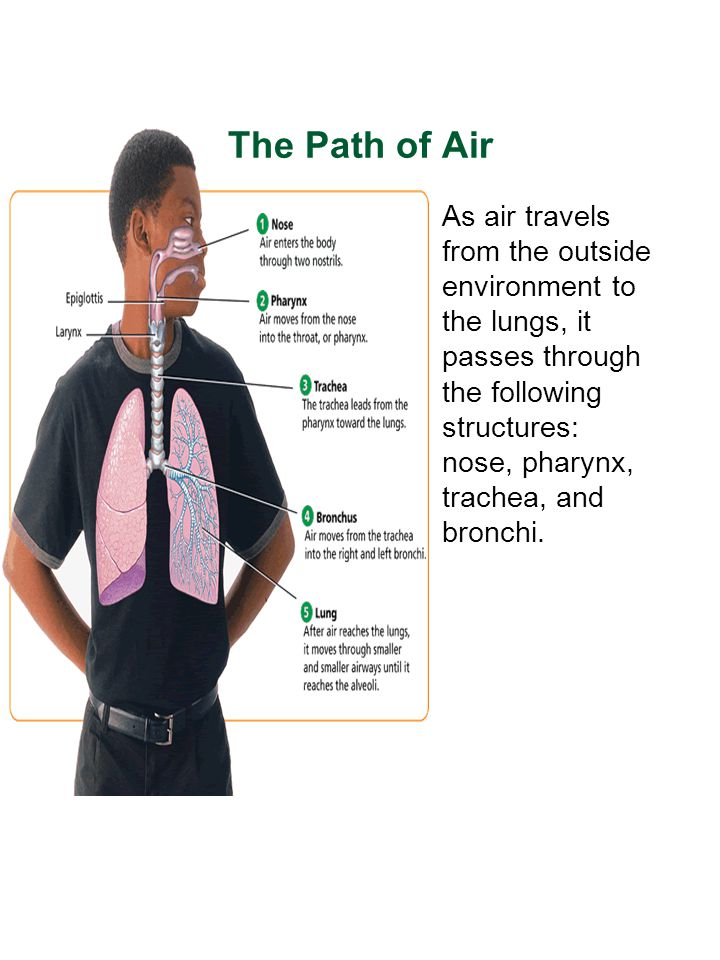 The Path of Air