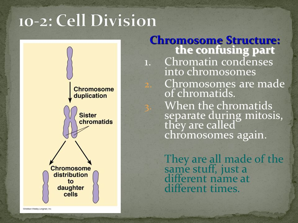 Chromosome Structure: the confusing part