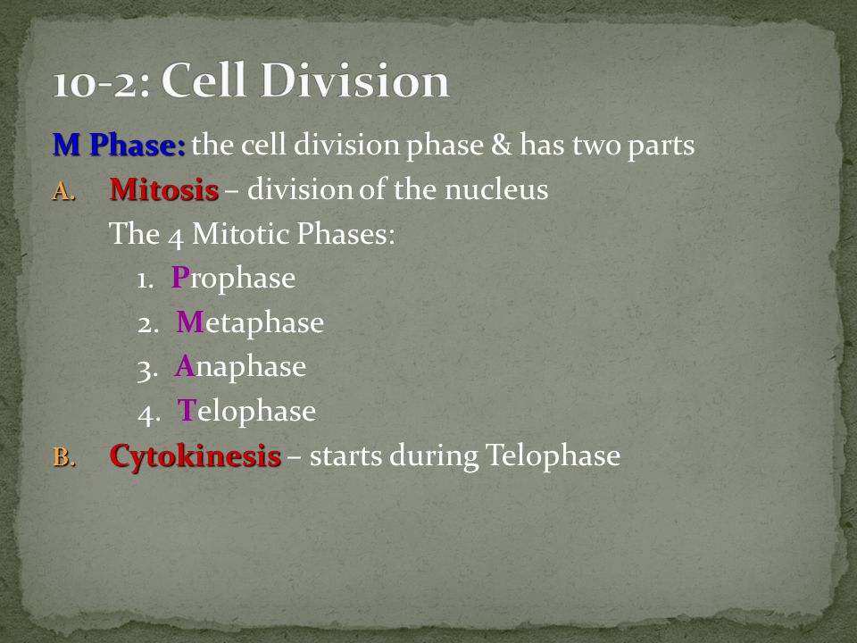 10-2: Cell Division M Phase: the cell division phase & has two parts