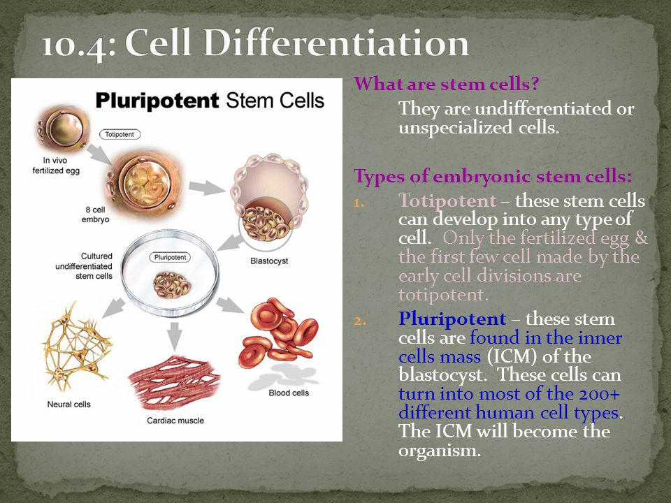 10.4: Cell Differentiation