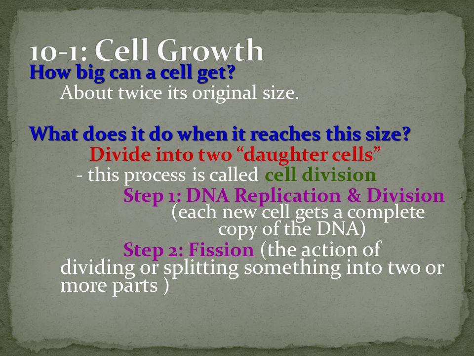 10-1: Cell Growth