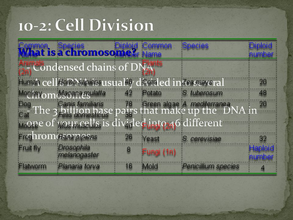 10-2: Cell Division
