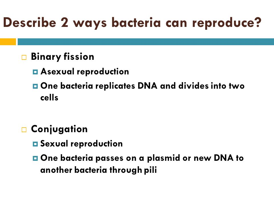 Describe 2 ways bacteria can reproduce