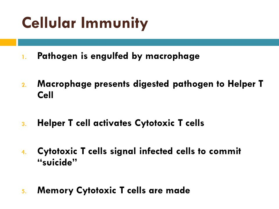 Cellular Immunity Pathogen is engulfed by macrophage