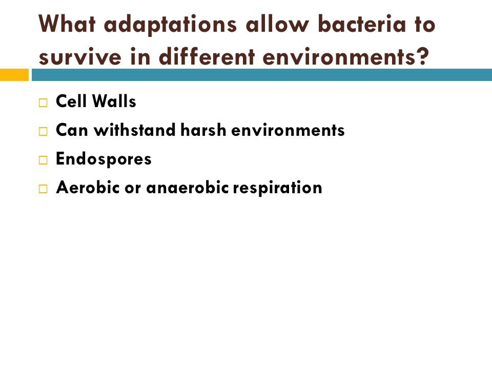 What adaptations allow bacteria to survive in different environments