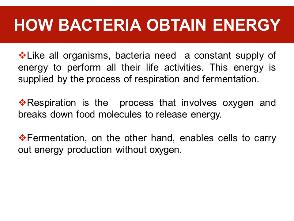 HOW BACTERIA OBTAIN ENERGY