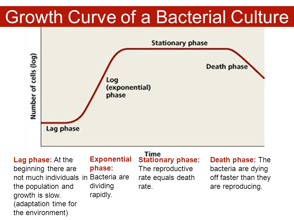 Growth Curve of a Bacterial Culture