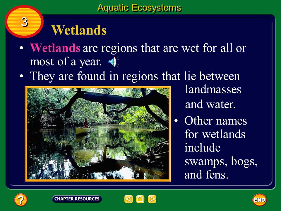 Aquatic Ecosystems 3. Wetlands. Wetlands are regions that are wet for all or most of a year. They are found in regions that lie between.