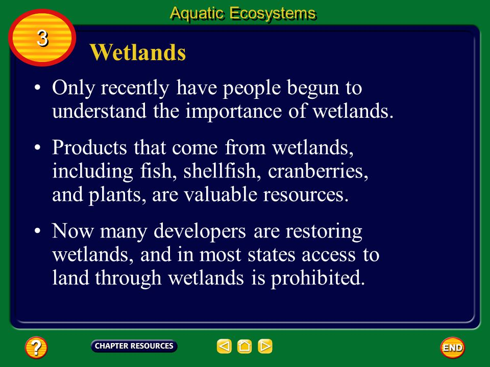 Aquatic Ecosystems 3. Wetlands. Only recently have people begun to understand the importance of wetlands.