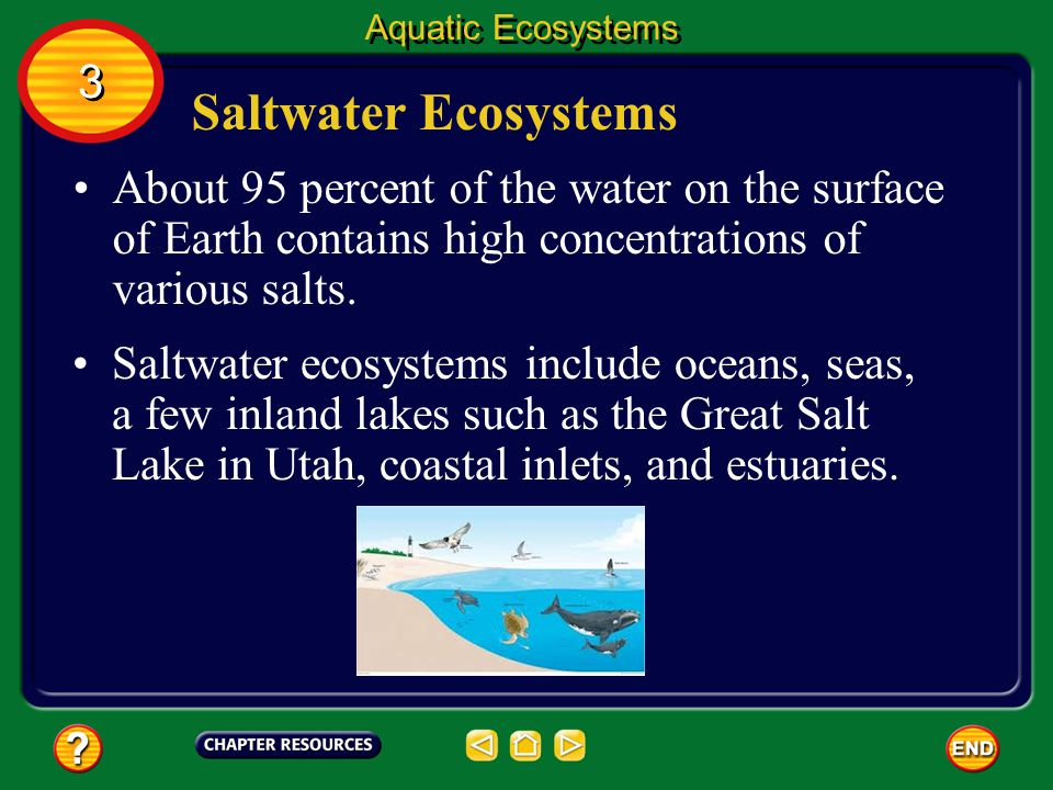 Aquatic Ecosystems 3. Saltwater Ecosystems. About 95 percent of the water on the surface of Earth contains high concentrations of various salts.