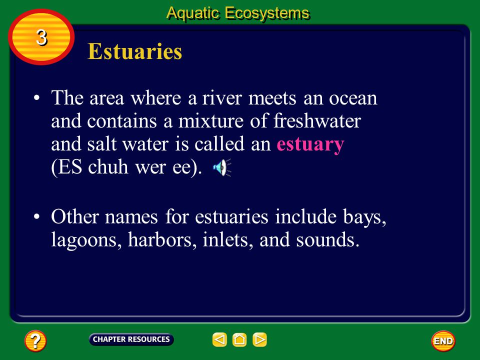 Aquatic Ecosystems 3. Estuaries.