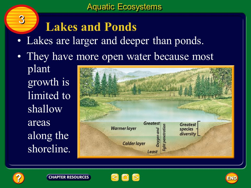 Lakes and Ponds 3 Lakes are larger and deeper than ponds.