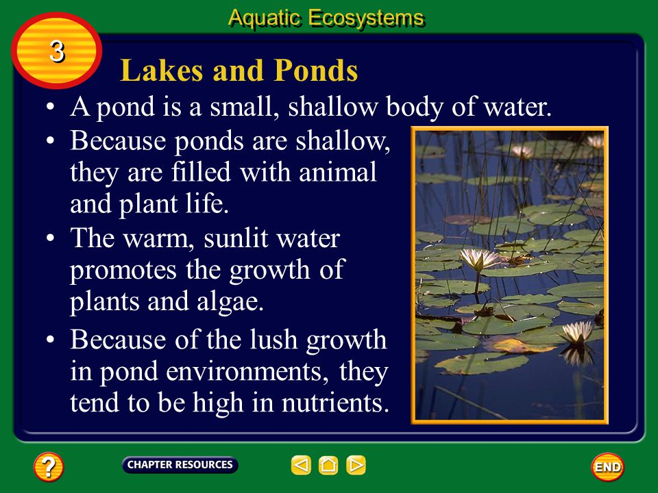 Lakes and Ponds 3 A pond is a small, shallow body of water.