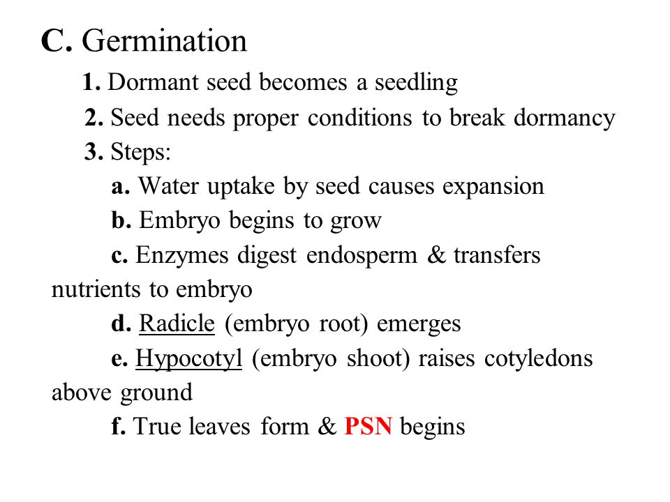 C. Germination 1. Dormant seed becomes a seedling
