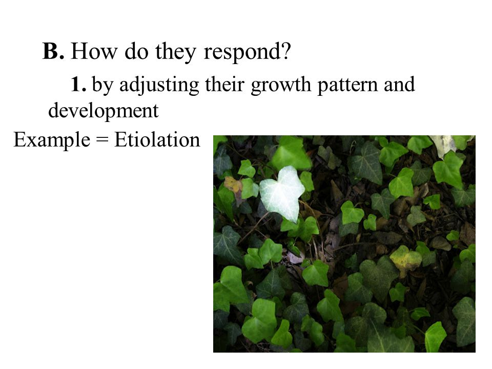 B. How do they respond 1. by adjusting their growth pattern and development Example = Etiolation