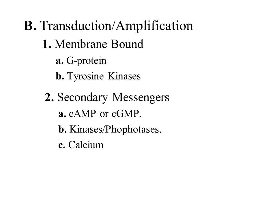 B. Transduction/Amplification