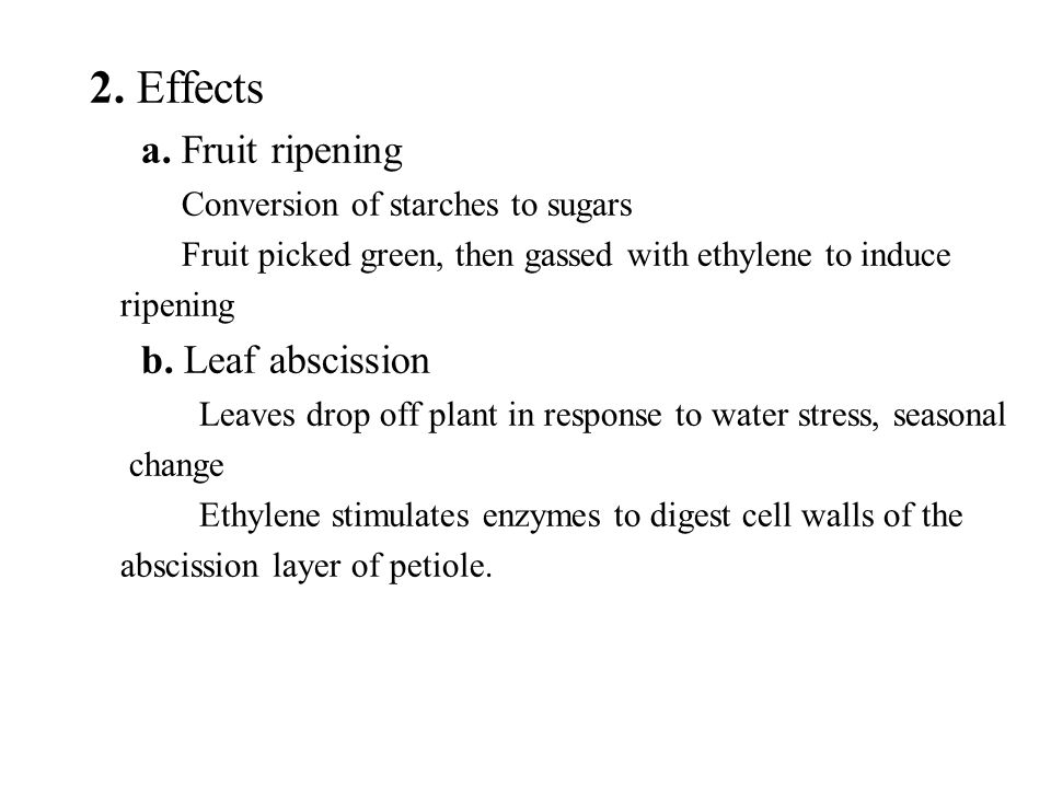 2. Effects a. Fruit ripening b. Leaf abscission