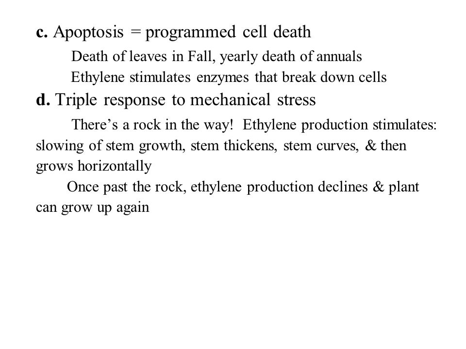 c. Apoptosis = programmed cell death