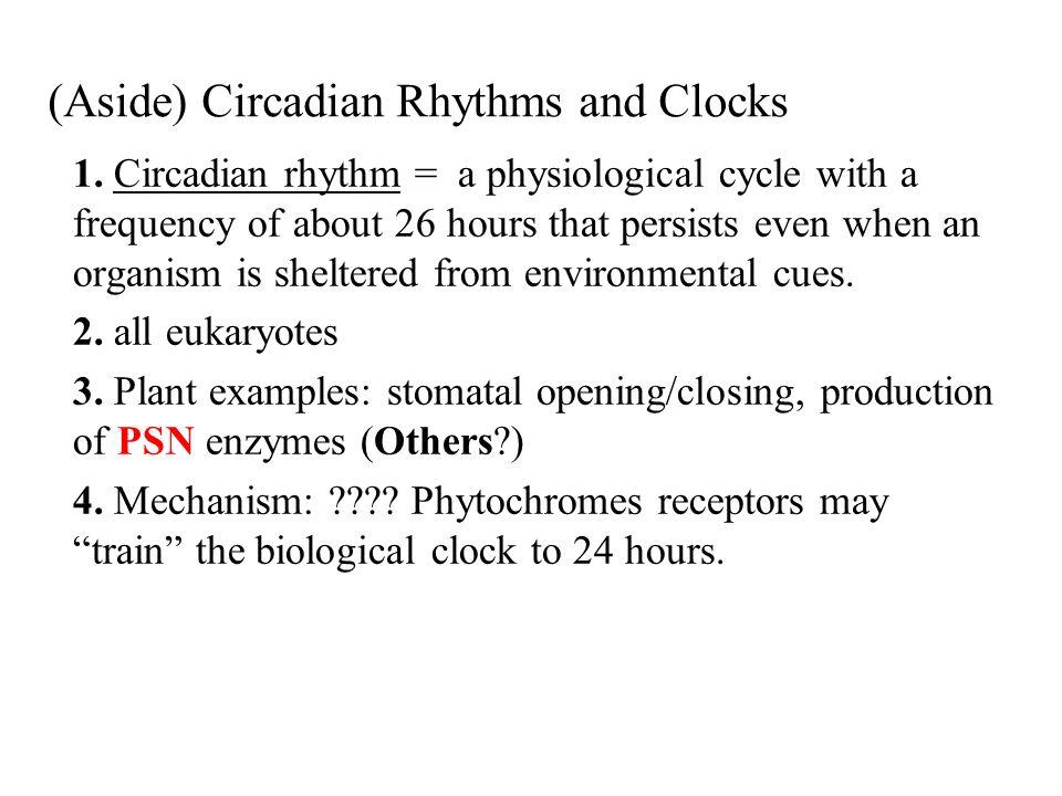 (Aside) Circadian Rhythms and Clocks