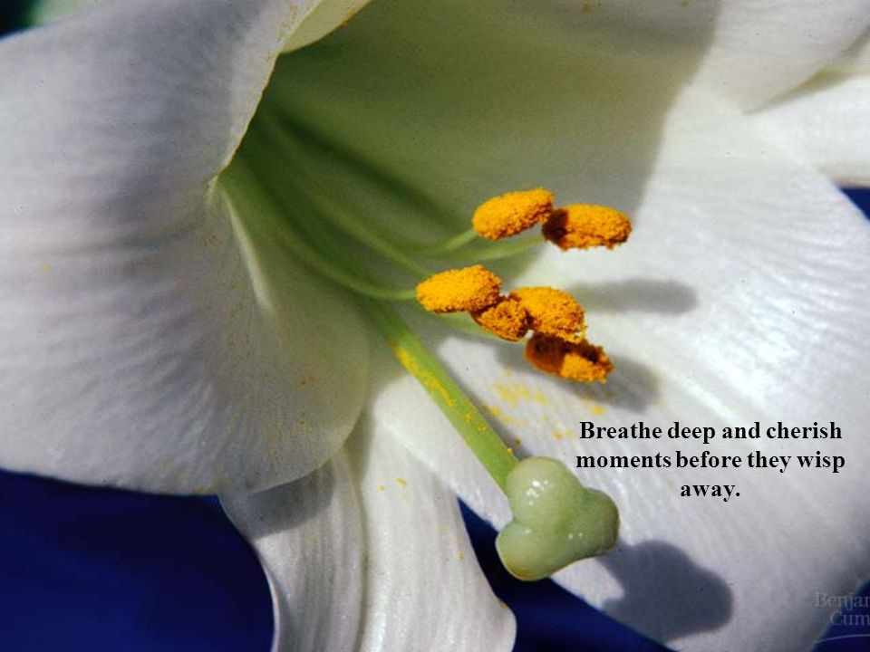 Breathe deep and cherish moments before they wisp away.