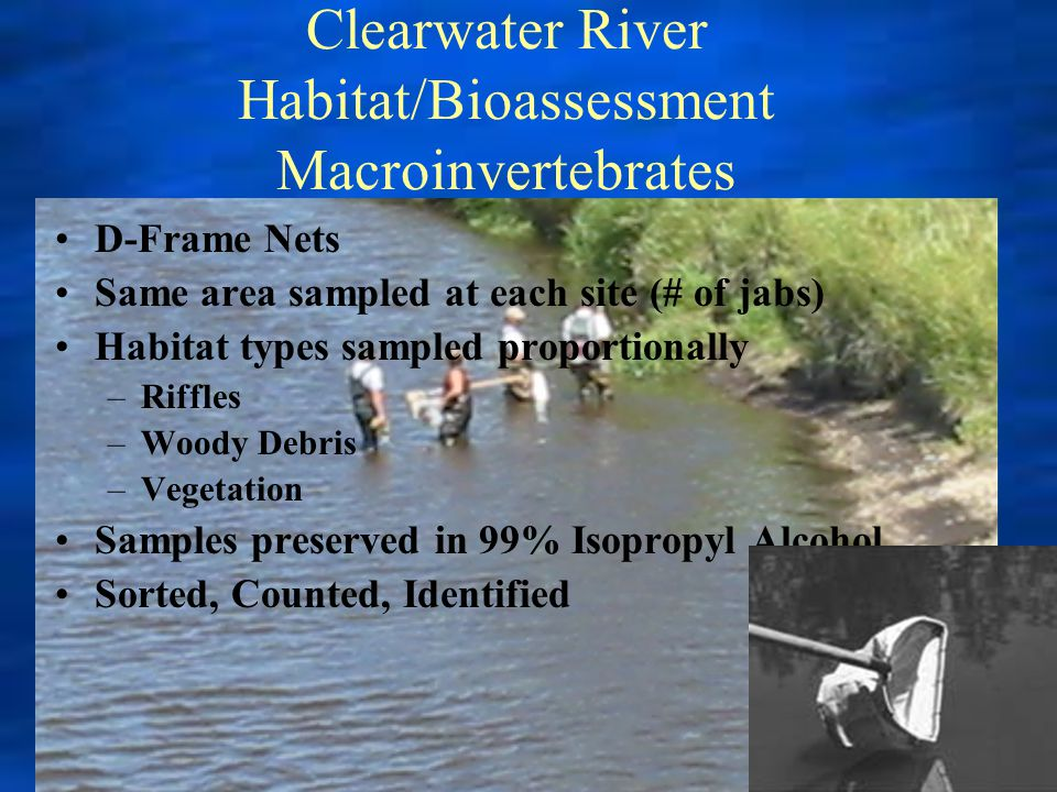 Clearwater River Habitat/Bioassessment Macroinvertebrates