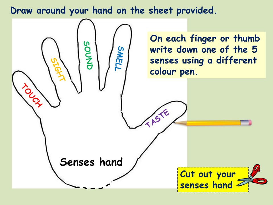 Senses hand Draw around your hand on the sheet provided.