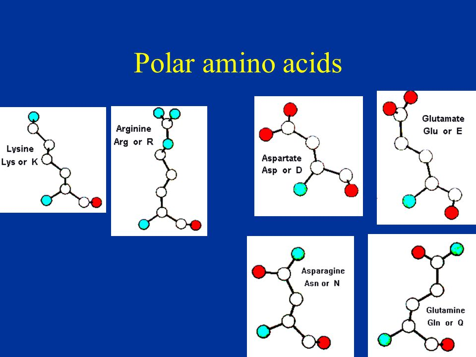 Polar amino acids