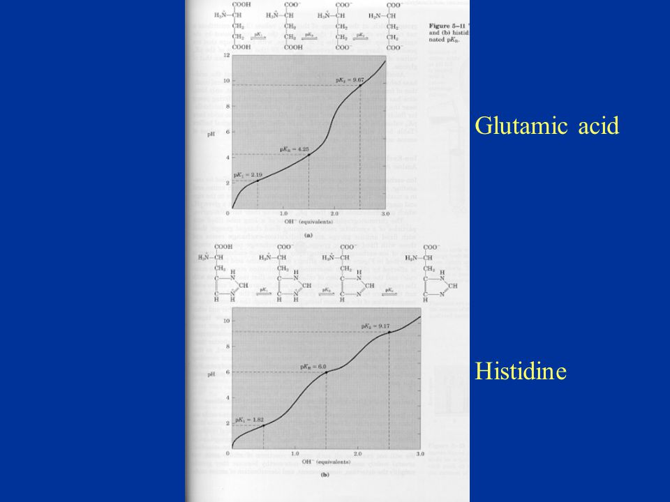Glutamic acid Histidine