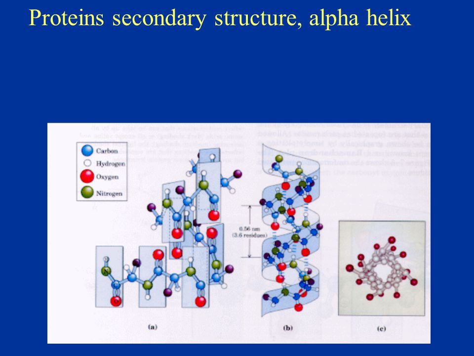 Proteins secondary structure, alpha helix