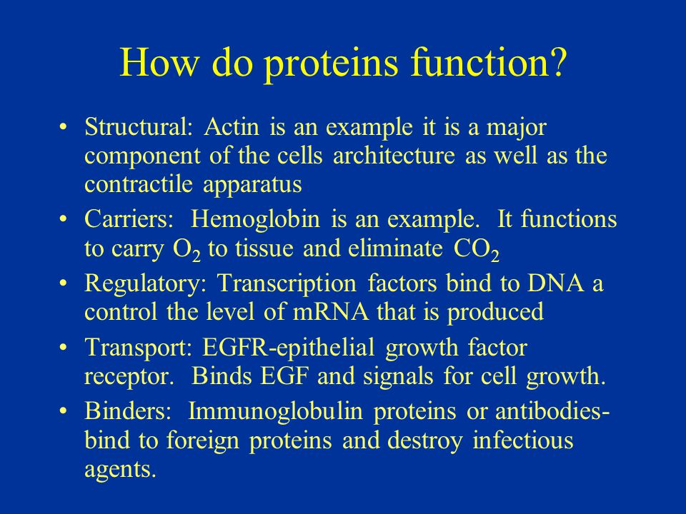 How do proteins function