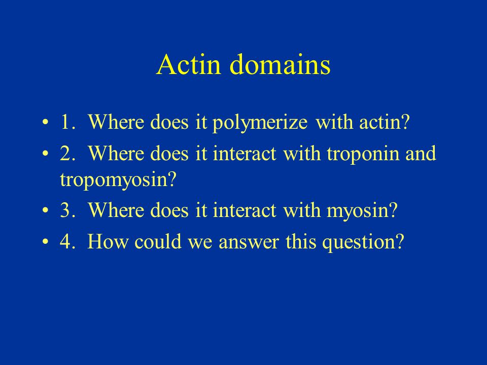 Actin domains 1. Where does it polymerize with actin