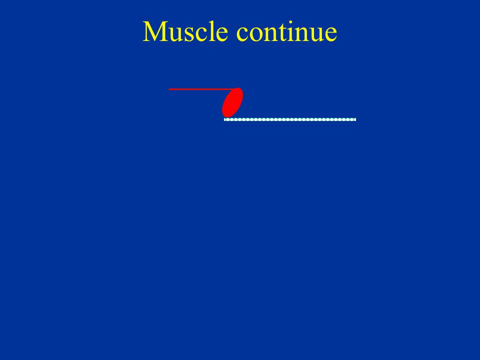 Muscle continue