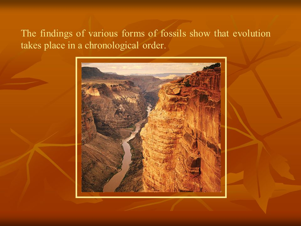 The findings of various forms of fossils show that evolution takes place in a chronological order.