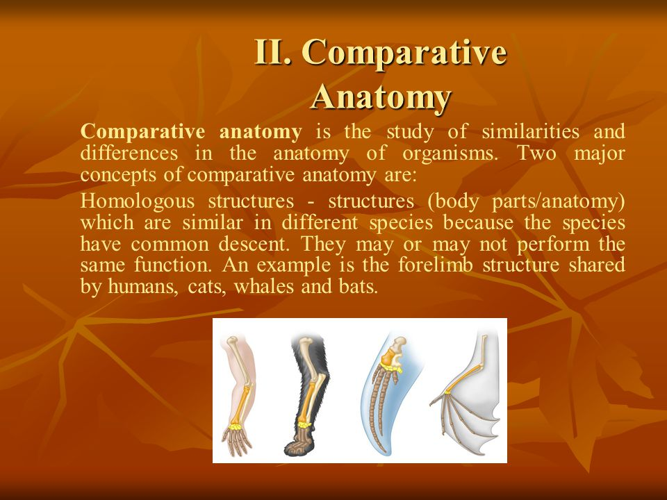 II. Comparative Anatomy