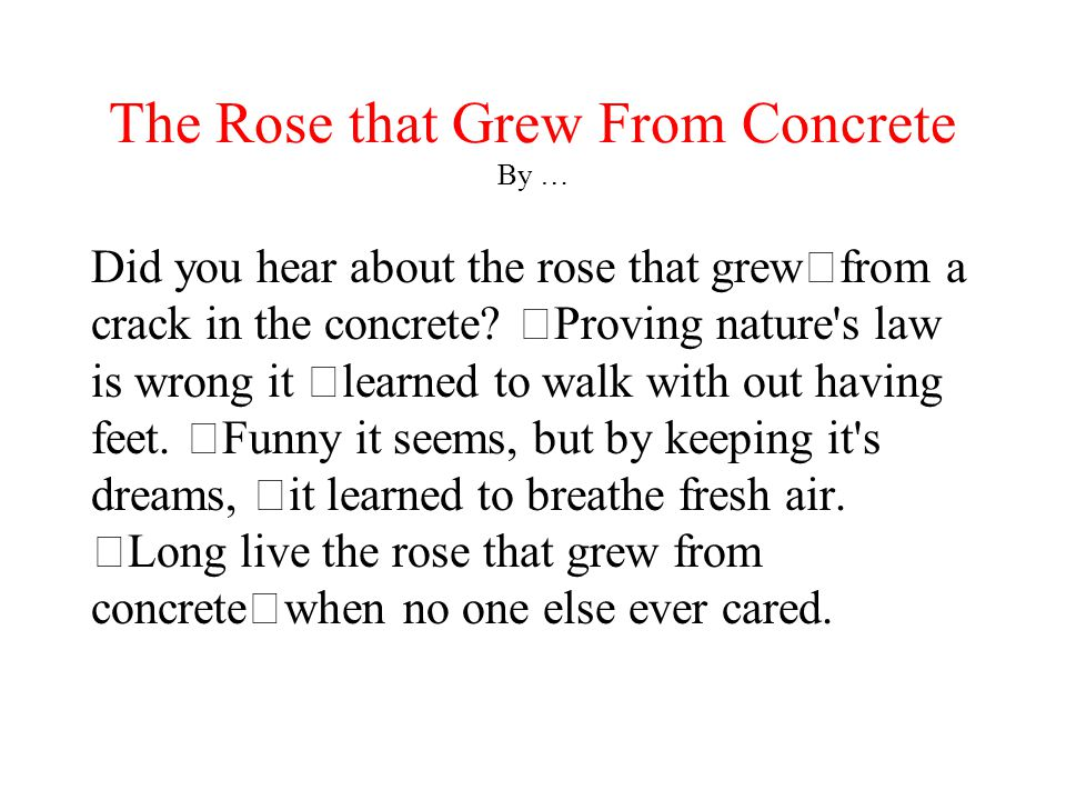 The Rose that Grew From Concrete By …
