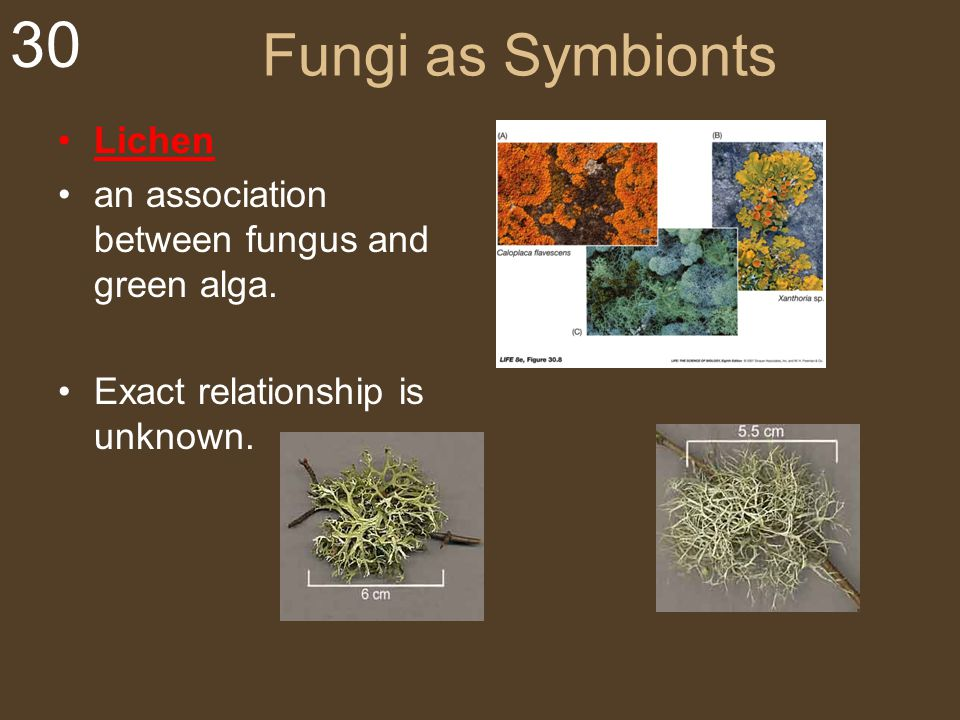 Fungi as Symbionts Lichen